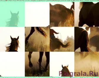 Картинка к игре Головоломка лошади