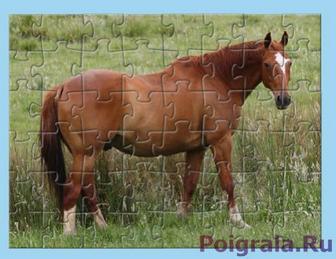 Картинка к игре Головоломка, собери лошадь