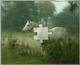 Пазл белая лошадка картинка 1