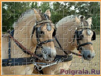2 лошади в упряжке картинка 1