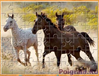 Лошади резвятся на лугу картинка 1