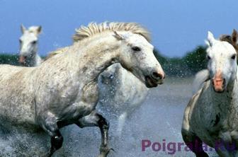 Игра Белые лошади в воде