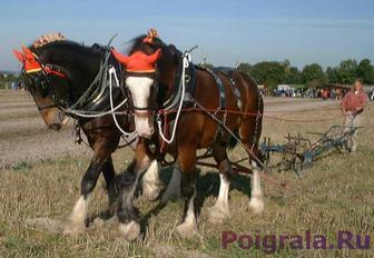 Лошади пашут землю картинка 1