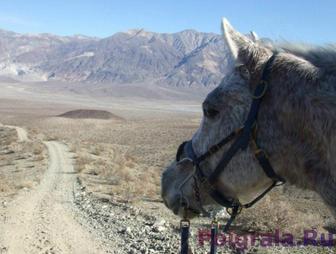 Лошадка в горах картинка 1