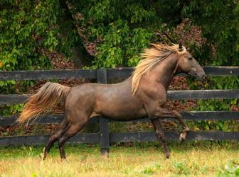 Пазл, собери лошадку картинка 1