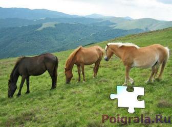 Картинка к игре Пазл, лошади на лугу