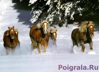 Игра Пазл, лошади зимой