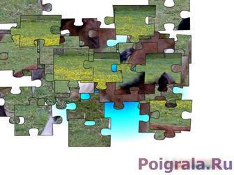 Картинка к игре Пазл, маленький жеребенок