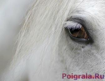 Глаза лошади, пазл картинка 1