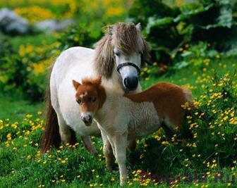 Игра Пазл, два маленьких пони