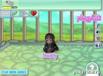 Уход за обезьянкой картинка 1