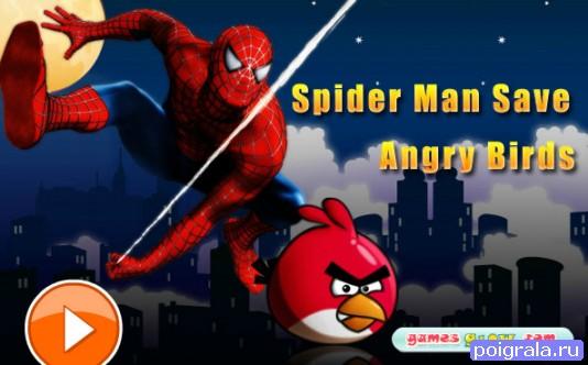 Игра Человек-паук спасает энгри бердс